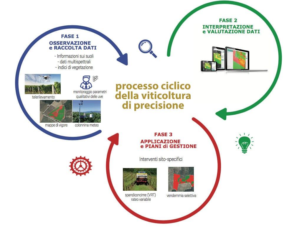 Processo ciclico della viticoltura di precisione